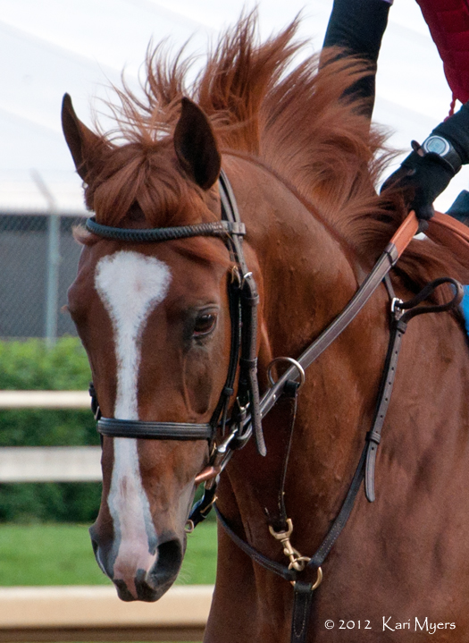 May 3, 2012: Dullahan on the track at Churchill Downs a few mornings before the Kentucky Derby.