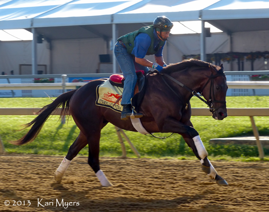 May 17, 2013: Itsmyluckyday stretches his legs at Pimlico the morning before his second place finish behind Oxbow in the Preakness.