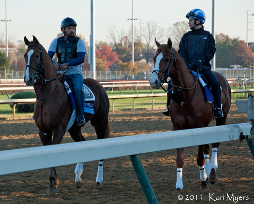 Nov 2, 2011: The two most handsome colts on the track during Breeders' Cup: Dullahan (left) and Shackleford.