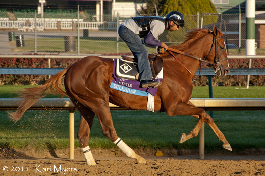 Nov 2, 2011: 2 year old Dullahan gallops in preparation for the Breeders' Cup Juvenile.
