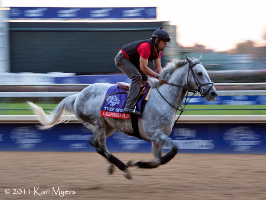 Nov 3, 2011: California Flag gallops on the main track at Churchill Downs a few days before his start in the Breeders' Cup Turf Sprint.