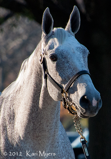 Nov 5, 2012: Ponche de Leona, shown here in foal to Tapit, is the dam of '13 Breeders' Cup Classic winner Mucho Macho Man.