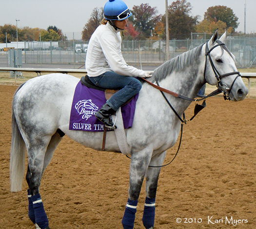 Nov 3, 2010: The lovely Silver Timber. He finished a respectable 5th in the Turf Sprint behind Chamberlain Bridge.