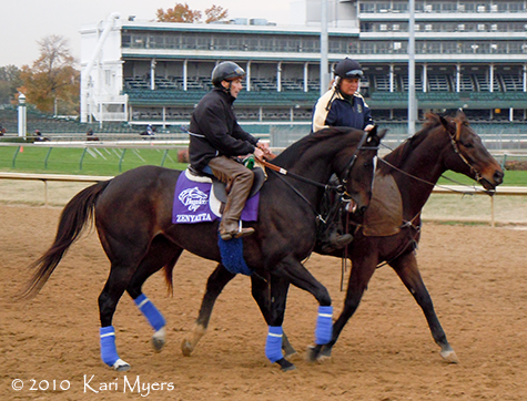Nov 3, 2010: Zenyatta, two days before the only loss in her career.
