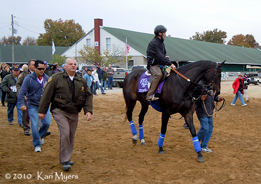 Nov 3, 2010: Zenyatta makes her way from the barn to the track. There were over 100 people following her, including camera crews, photographers, and fans. This remains one of the most amazing things I've ever seen in horse racing.