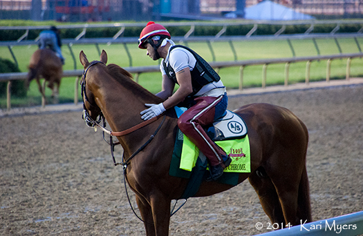Apr 30, 2014: California Chrome watches other horses running by this morning.