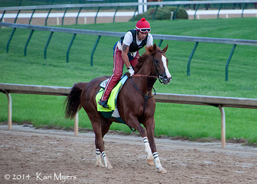 Apr 30, 2014: California Chrome on his first lap around the track this morning.