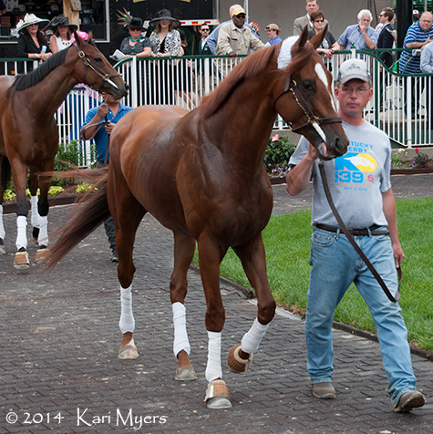 Golden Soul, 2nd in last year's Kentucky Derby to Orb, is entered to run in Friday's Grade 2 Alysheba Stakes.