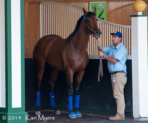 Candy Boy, a contender for this weekend's Kentucky Derby.