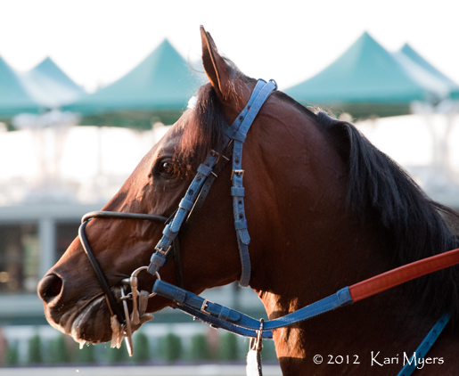 May 2, 2012: Dawn at the Downs is a great way to introduce yourself to Churchill Downs during Derby week.