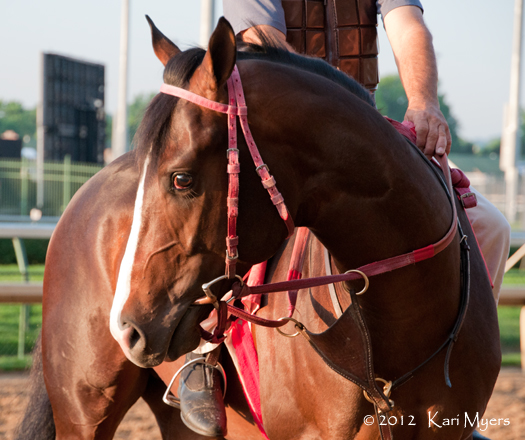 May 2, 2012: Horses line up along the rail and wait their turn for a gallop.