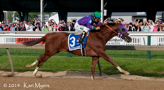 May 17, 2014: California Chrome in the stretch of the Preakness.