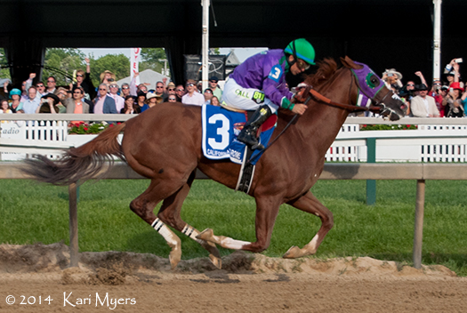 May 17, 2014: California Chrome and Victor Espinoza take off to win the Preakness by 1 ½ lengths.