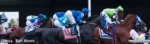 May 17, 2014: Elevated (#11) in the James W. Murphy Stakes at Pimlico.