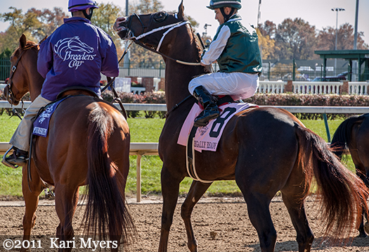 Nov 5, 2011: Regally Ready was on his toes on the way to the gate for his win in the Breeders' Cup Turf Sprint at Churchill Downs.