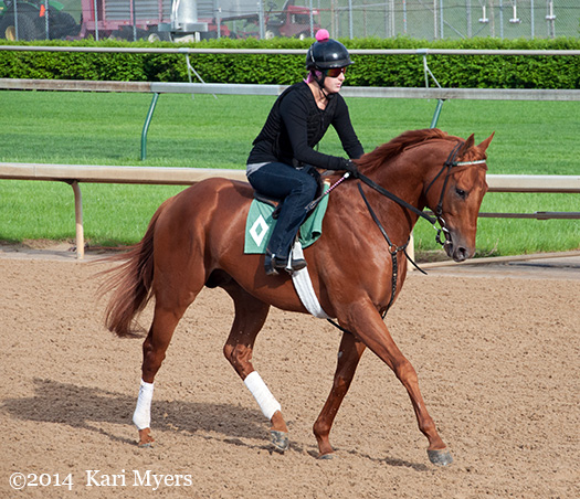 Apr 29, 2014: Seek Again a few mornings before finishing 2nd in the Woodford Reserve Turf Classic, a head behind multiple Horse of the Year Wise Dan.