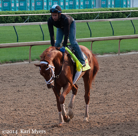 Apr 30, 2014: Danza a few mornings before his 3rd in the Kentucky Derby.