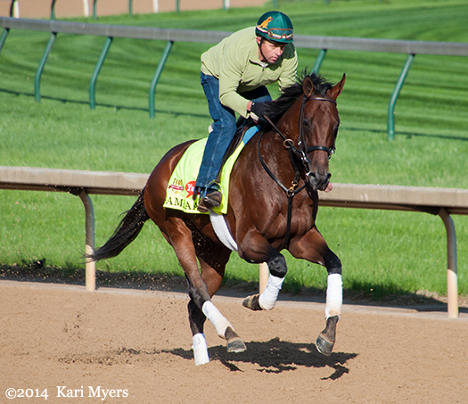 May 1, 2014: Samraat galloping in preparation for the Kentucky Derby last year.