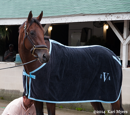 Apr 30, 2014: Samraat waiting for his bath after a gallop at Churchill Downs.