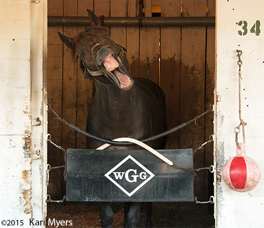 Oct 17, 2015: Ride On Curlin at Churchill Downs.